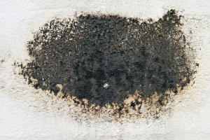 Black Mold – Everything you need to know
